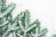 Spruce twig covered with snow Royalty Free Stock Photos