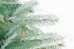 Spruce twig covered with snow Stock Photos