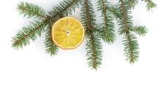 Spruce twig with dried orange slice on white background Royalty Free Stock Photo