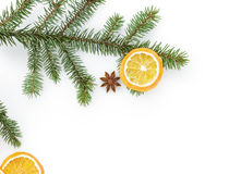 Spruce twig with dried orange slices on white background Royalty Free Stock Photo