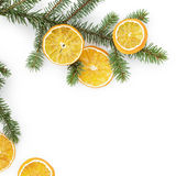 Spruce twig with dried orange slices on white background Royalty Free Stock Photos