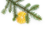 Spruce twig with dried orange slices on white background Royalty Free Stock Image