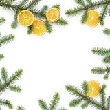 Spruce twig with dried orange slices on white background Stock Photos