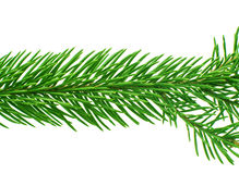 Spruce twig Stock Photography