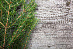 Spruce twig on a wooden background.with space for text Stock Photos