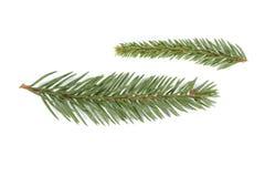Spruce Twigs Stock Photos