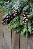 Spruce twigs and cones covered with artificial snow Royalty Free Stock Image