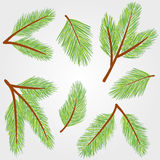 Spruce twigs illustration Stock Photo