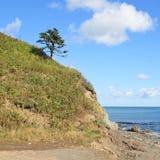 Spruce vid hav Royaltyfria Bilder