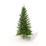 Spruce on white Royalty Free Stock Image