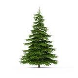 Spruce on white Stock Image