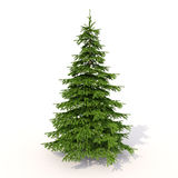 Spruce on white Stock Images