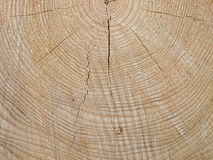 Spruce wood with tree-rings Stock Images