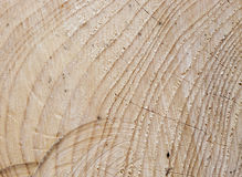 Spruce wood with tree-rings Stock Image