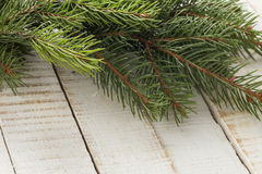 Spruce on wooden background. Stock Photos