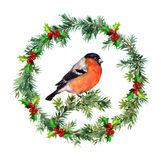 Spruce wreath - fir, mistletoe and bullfinch. Watercolor. Fir tree, mistletoe and birds isolated. Watercolor hand made desig Royalty Free Stock Photos
