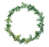 Spruce wreath - fir tree. Watercolor Stock Image