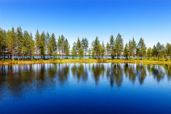 Spruces on a narrow isthmus and their reflections on lake Seiten Royalty Free Stock Photography