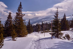 Spruces snow-covered tourist trail in the Giant Mountains Stock Photography