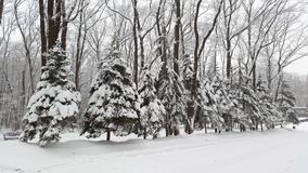 Spruces under snow in park. Spruces under white snow in park royalty free stock photography
