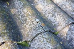 Sprucken asbest täcker det gamla taket Asbestsingelreparation och borttagning arkivbilder