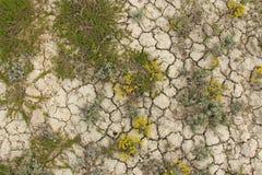 sprucken bakgrund torkar jord sprucken mudmodell Jord i spricka Arkivbild
