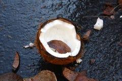 Sprucken brun kokosnöt för Ganesh Chaturthi Arkivbilder