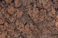 Sprucken jord f?r r?d lera i torka Ett gr?nt blad av gr?s g?r dess v?g till och med den livl?sa jorden arkivfoton