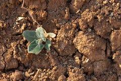 Sprucken jord f?r r?d lera i torka Ett gr?nt blad av gr?s g?r dess v?g till och med den livl?sa jorden arkivbilder