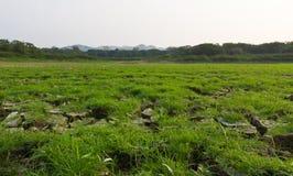 Sprucken jord och grässlätt Royaltyfria Foton