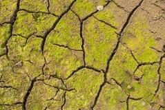 sprucken jordning Royaltyfria Bilder