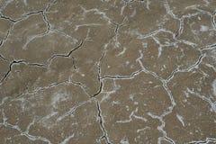 Sprucken salthaltig jord Royaltyfria Bilder