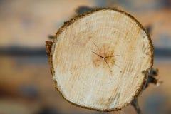 Sprucken splittring av trädet Arkivbild