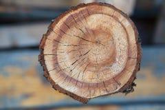 Sprucken splittring av trädet Royaltyfri Fotografi