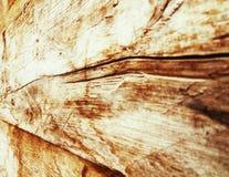 Sprucken textur av ett omodernt träd i perspektiv Arkivfoto