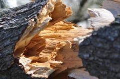 Sprucken trädstam - Fotografering för Bildbyråer