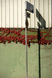 Sprucken vägg med vinrankasidor och skuggor Arkivfoto