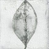 Sprucket blad Textural abstrakta Zen Painting royaltyfria bilder