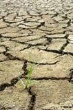 Sprucket jord och gräs Fotografering för Bildbyråer