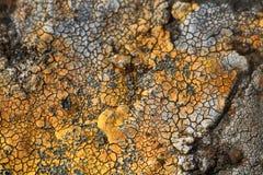 sprucket torka jord Öknen arkivbild