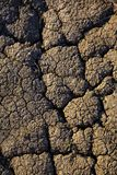 sprucket torka jord arkivbilder