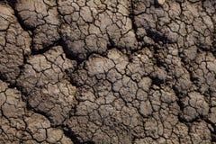 sprucket torka jord royaltyfria bilder