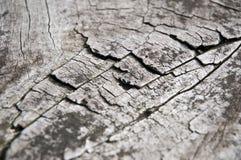 sprucket trä Arkivfoto