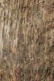sprucket trä för bakgrund Royaltyfri Fotografi