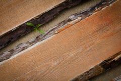 Spruit die over de houten vloer ontspruiten stock foto