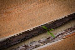 Spruit die over de houten vloer ontspruiten Royalty-vrije Stock Afbeeldingen