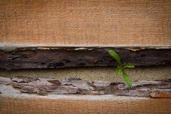 Spruit die over de houten vloer ontspruiten royalty-vrije stock fotografie