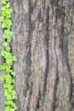 Spruit die over de houten vloer ontspruiten stock afbeelding