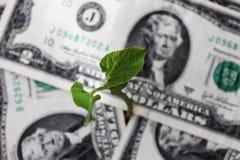 Spruit die uit het geld ontspruit Stock Fotografie