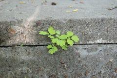 Spruit die zijn manier maken door de steenplakken royalty-vrije stock foto